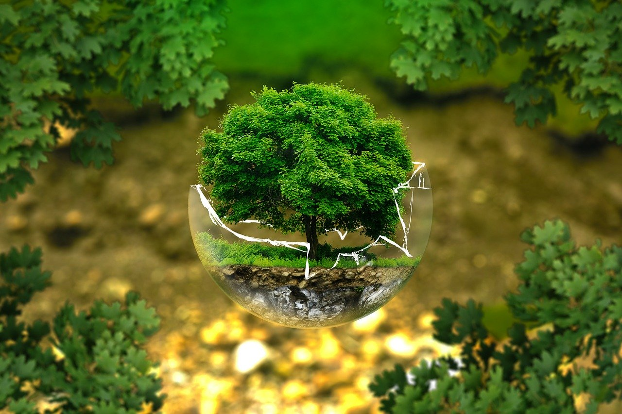environmental_6465